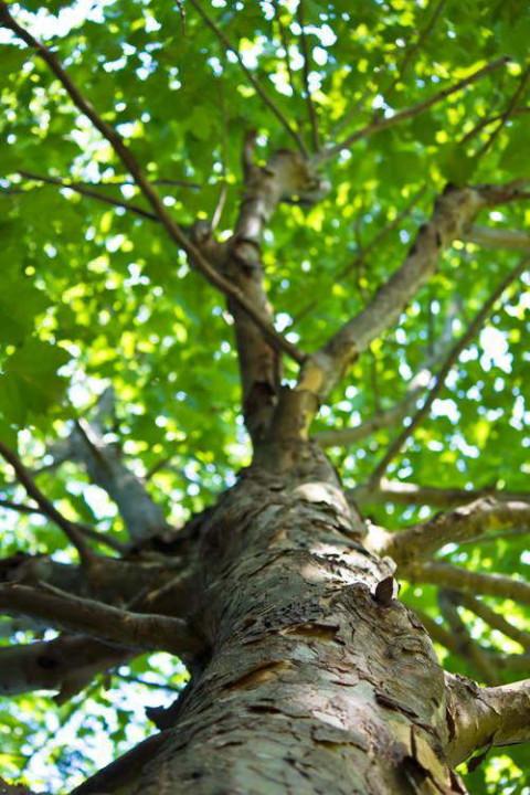 広葉樹・イメージ