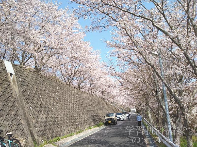 満開の桜@大阪府河内長野市某所